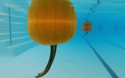 Swimming Pumpkins? A Fun Way to Learn About Buoyancy